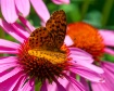 Butterfly on Cone...