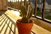 Cactus (late even...