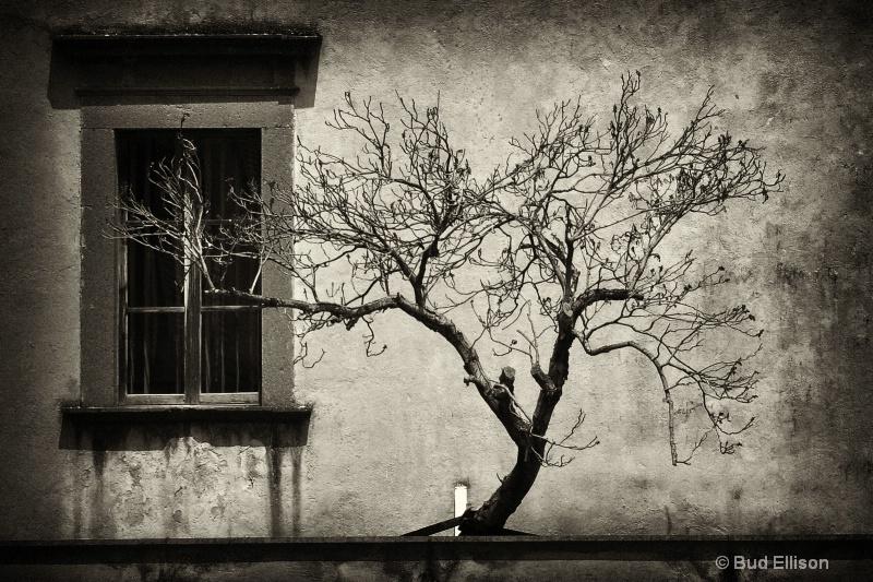 Window In Oriveto