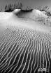 Dune Trails