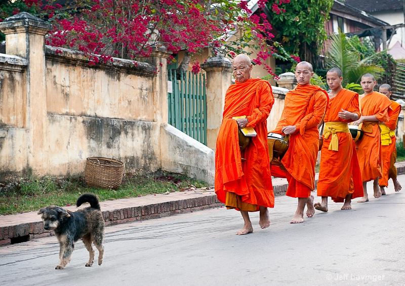 Luang Prabang, Laos, Monks with Dog - ID: 10505625 © Jeff Lovinger