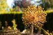 botanical burst