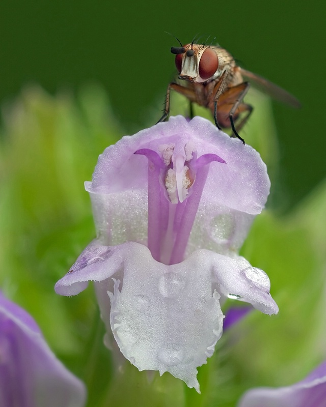 Fly on Flora