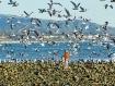 Gull Watcher