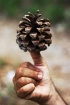 A pine thumbs up