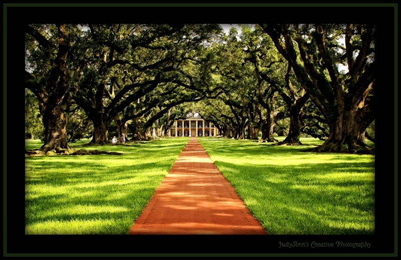 Oak Alley - ID: 10667641 © JudyAnn Rector