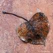 Leaf on Ceramic