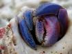 Crab Color