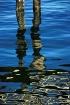 Pilings reflect