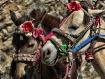 Tibetan Ponies