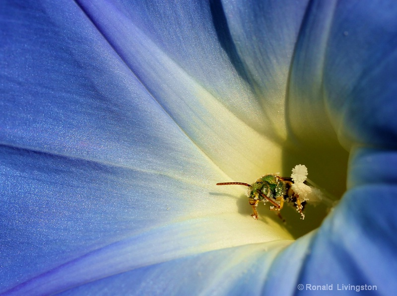 Green Bee in the Blues