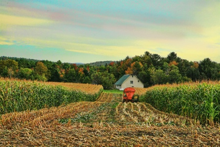 Maine Farm: End of work Day