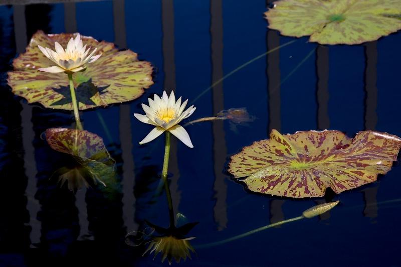 Time for Reflection - ID: 10715523 © Steve Abbett