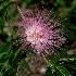 2Burst of Flower - ID: 10715622 © Steve Abbett