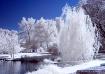 Mystical Park