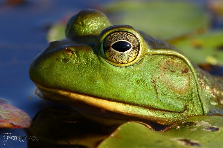 Frog's Eye View...