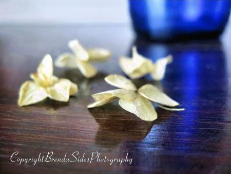 ~Fallen Petals~