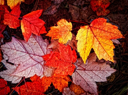 Autumn Intensity