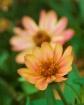 Orange Flower Ref...