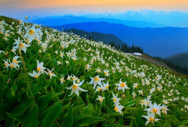 Wildflower avalanche