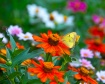 Orange Flower ...