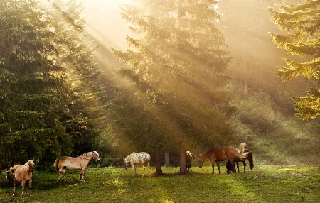 Camp Horses