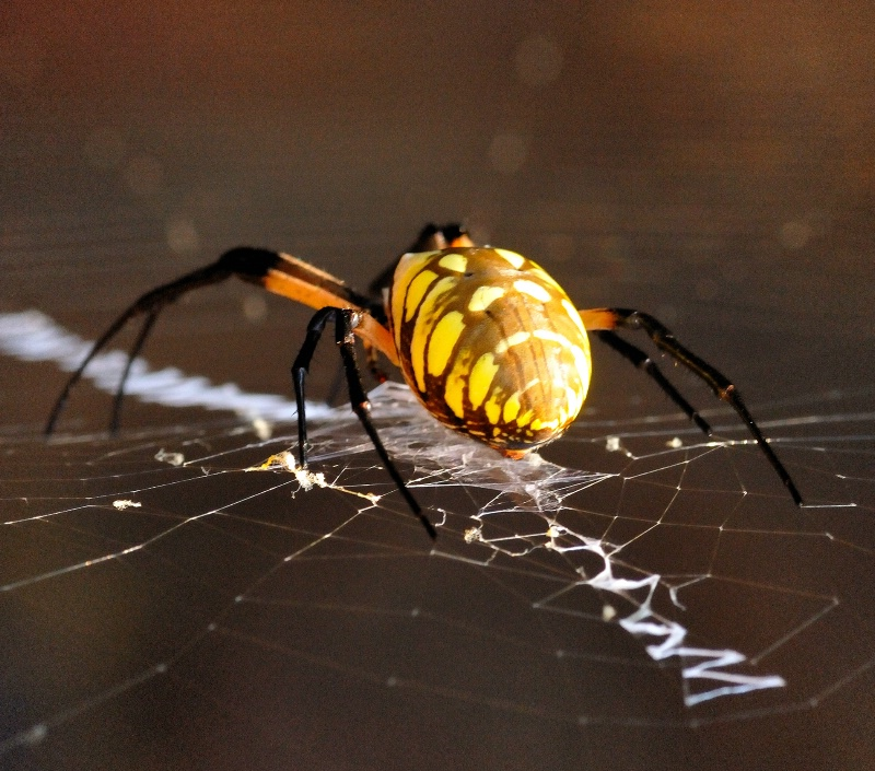 My little Spider Friend..
