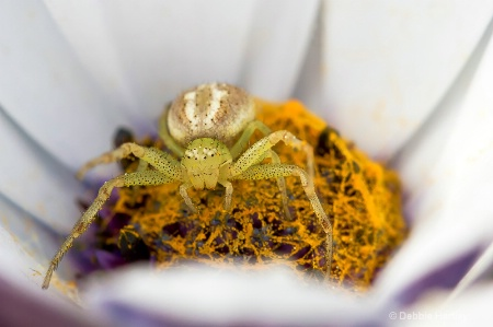 Messy Spider!