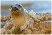 Grey Seal splashi...