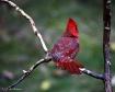 Red II - My Back ...