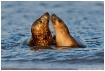 Seals in love Par...