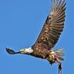 Bird of prey!