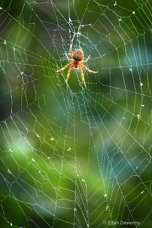 A Spider and  It