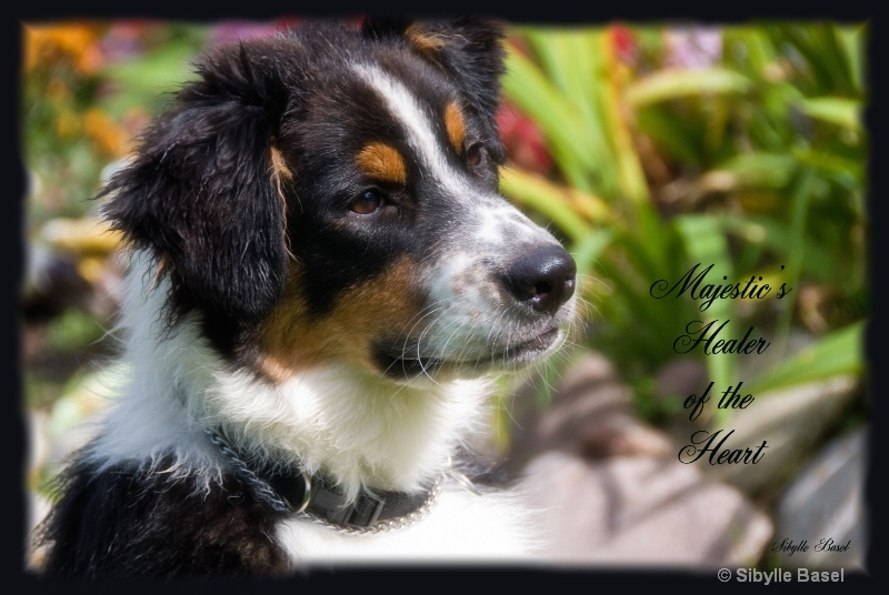 Majestic's Healer of the Heart - ID: 10867702 © Sibylle Basel