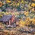 2Aldasoro Yesteryear - ID: 10877351 © Gary W. Potts