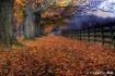 Autumn At Springt...