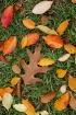 ~Fall Decor~