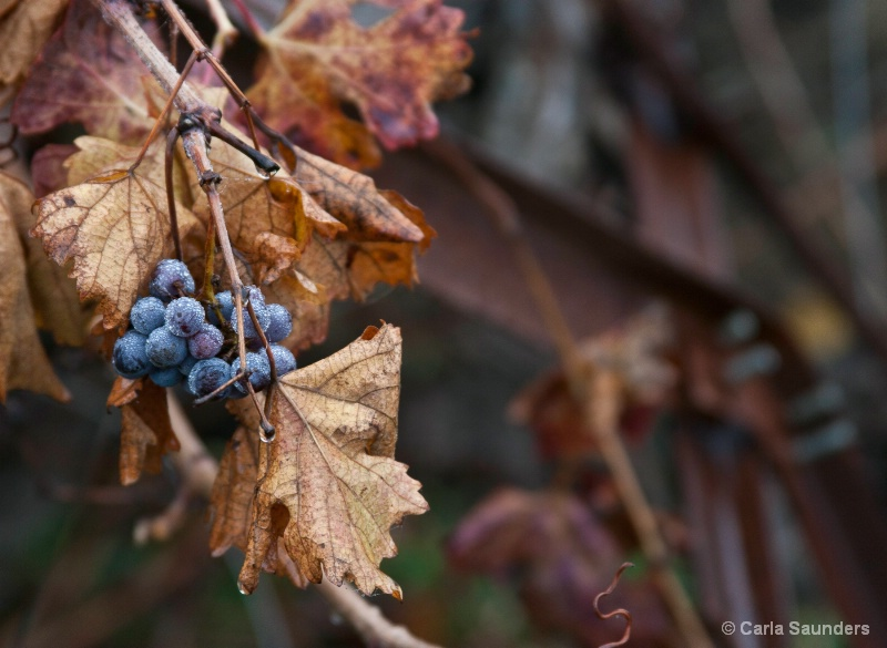 Shapes and Colors of Fall