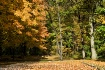 Autumn Taking Ove...