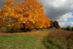 ~Autumn Path~