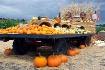 Trucking Pumpkins