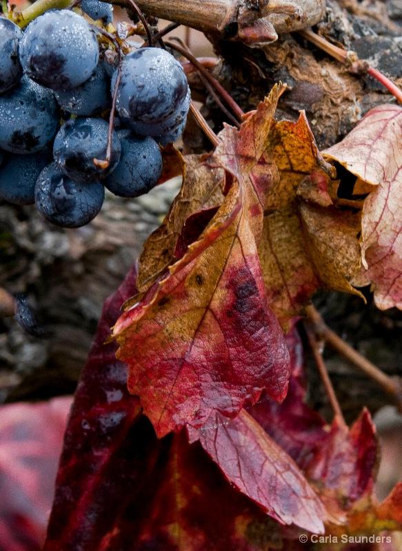 Leaves on the Vine