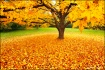 Autumn in New Eng...