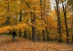Fall Trees & Carp...