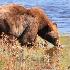 © Michael S. Couch PhotoID# 11022496: Grand Tetons, Jackson, Wyoming    9.24.10