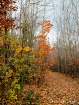Autumn Leaves Mus...