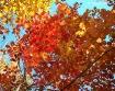 Showy Autumn