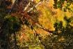 Fall's Reflec...
