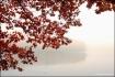 Foliage - Last Ca...