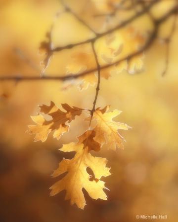 In the Golden light